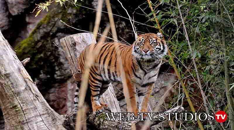 Bioparco:  Domenica 8 marzo Giornata mondiale Fauna selvatica