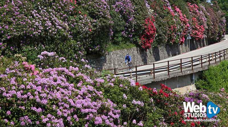Escursioni per ammirare la fioritura dei Rododendri