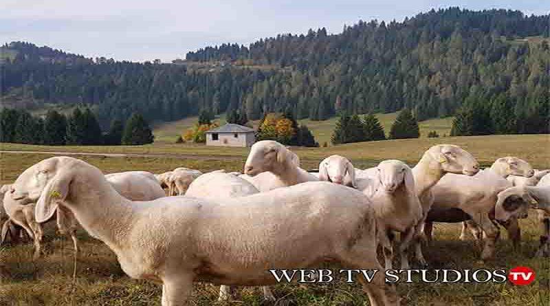 Fiume che Cammina: Pastori erranti sotto le stelle dall'Adriatico al Lagorai