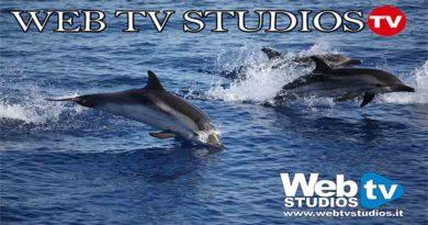 delfini venezia webtvstudios